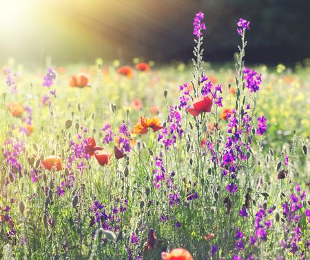 Blumenwiese Anlegen eine eigene blumenwiese anlegen gesundheitsjournalistin ch